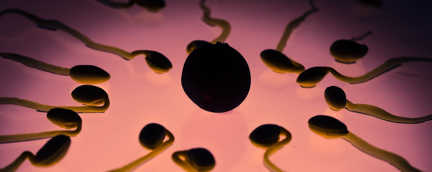 A free stock image depicting sperm approaching an egg for fertilization
